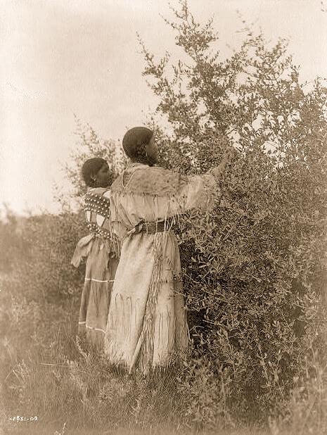 Mandan Mädchen sammeln Beeren
